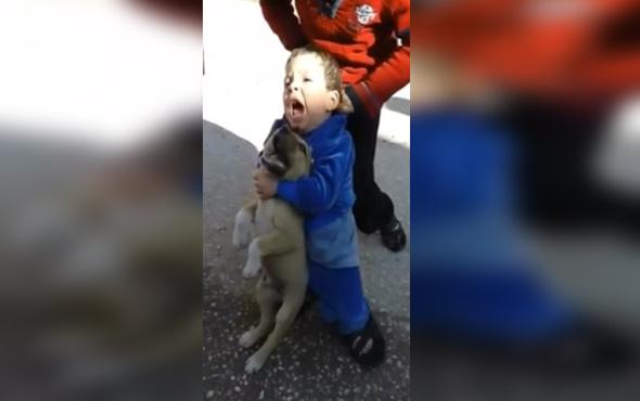 Çocuk köpeğin kulağını ısırırsa...