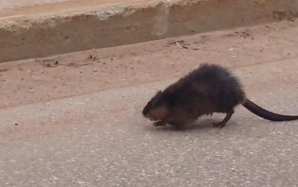 Dev fare böyle görüntülendi