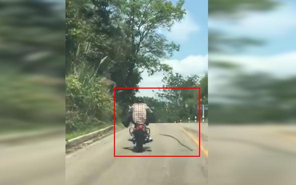 Yılan motosiklet sürücüsüne saldırdı