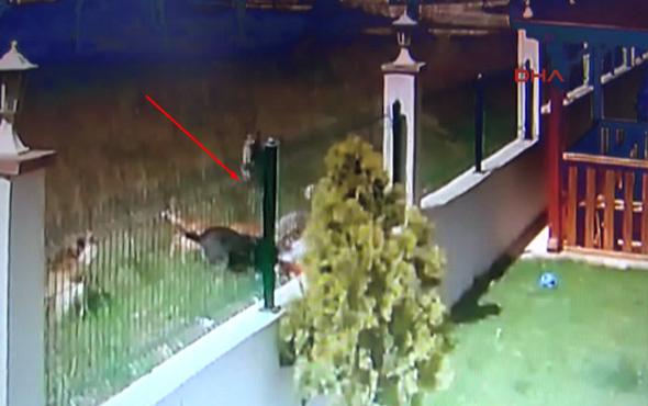 Topun peşinden koşan çocuğa köpekler saldırdı