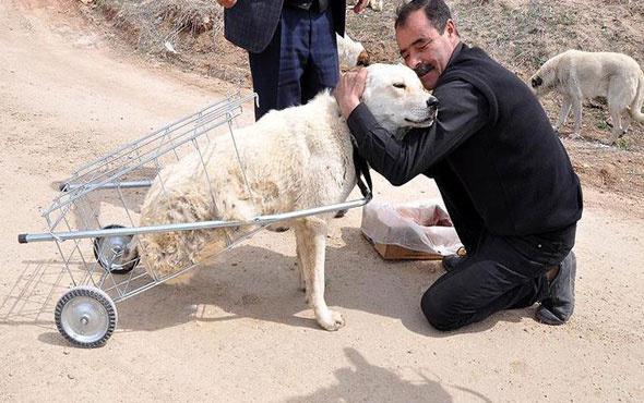 Yürüyemeyen köpeğe pazar arabasından yürüteç yaptı