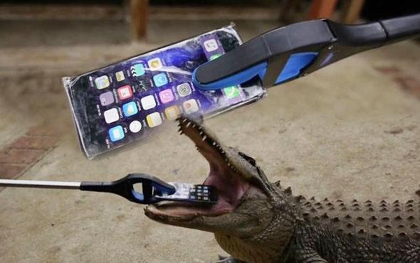 İPhone'u timsahların önüne attılar! Bakın sonra ne oldu