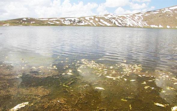 Van'da balık ölümleri için araştırma başlatıldı