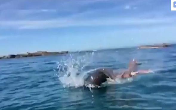 Fok balığıyla devasa ahtopotun savaşı!