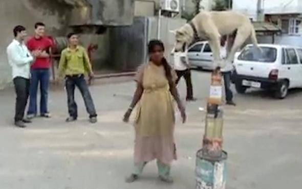 Akrobatik köpekten denge şovu!