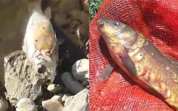 O balıkların neden öldüğü belli oldu!
