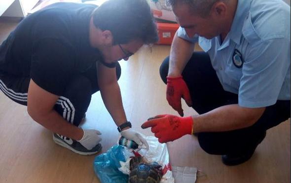 Felçli kedi ve yaralı kaplumbağaya zabıta sahip çıktı