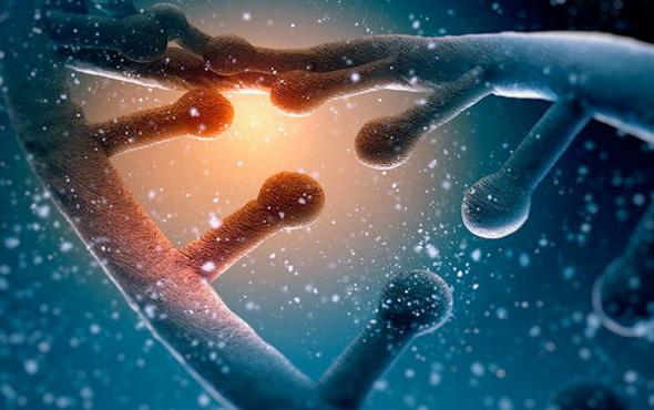 DNA hücresinde 'dört nala koşan at' görüntülendi