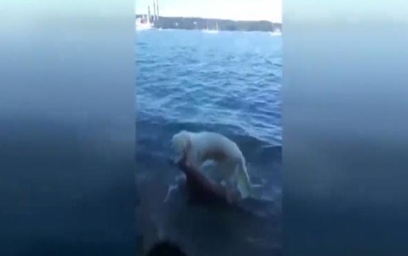 Boğulmak üzere olan geyiği kurtaran kahraman köpek