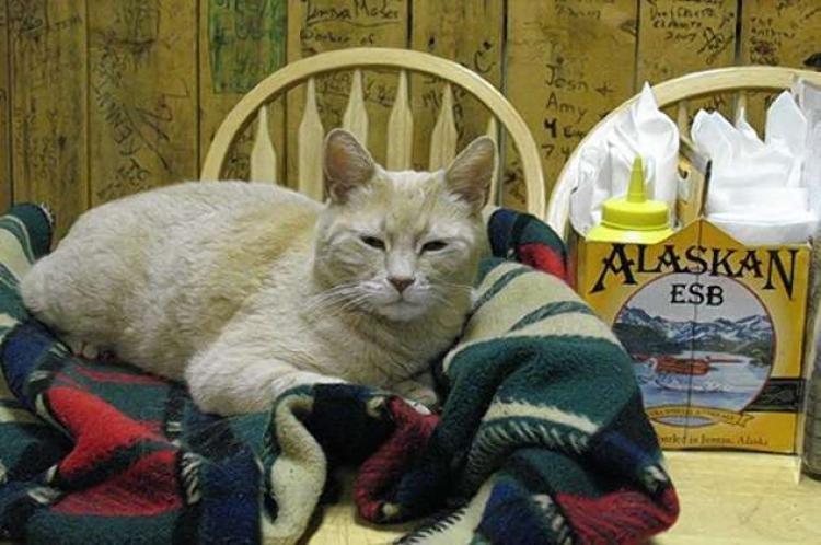 ABD'nin belediye başkanı kedisi öldü halk yas tuttu