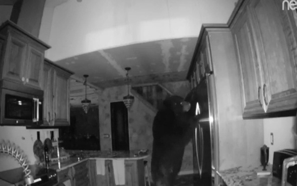 Mutfakta ayı var!