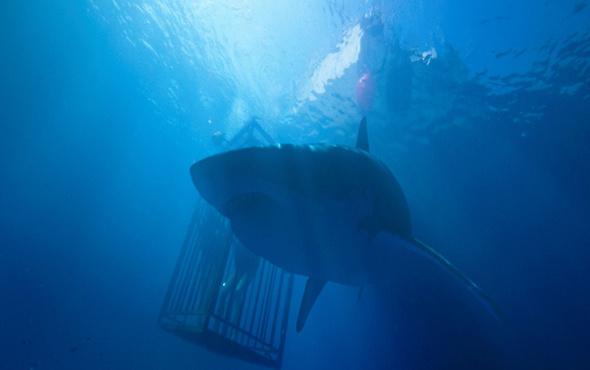 Denizde Dehşet filmi fragmanı - Sinemalarda bu hafta