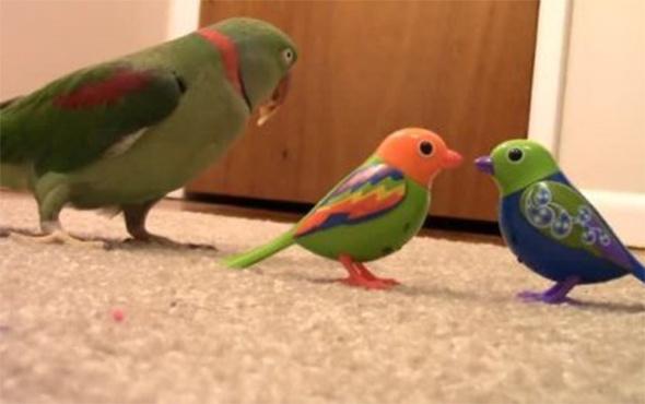 Papağan hırsızları yakalattı