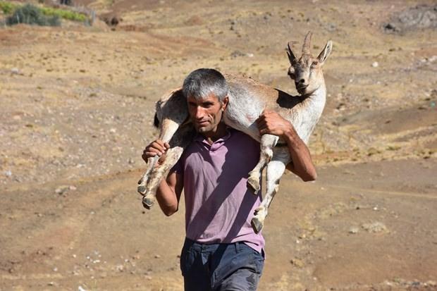 Çobandan 'helal olsun' dedirten hareket!