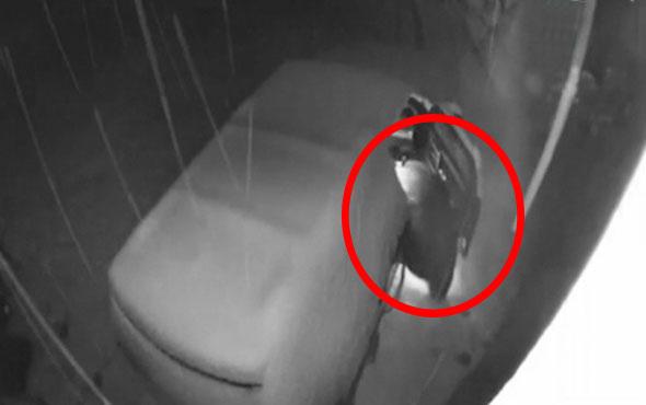 Meraklı ayı arabaya dadandı! Araç sahibi isyan etti
