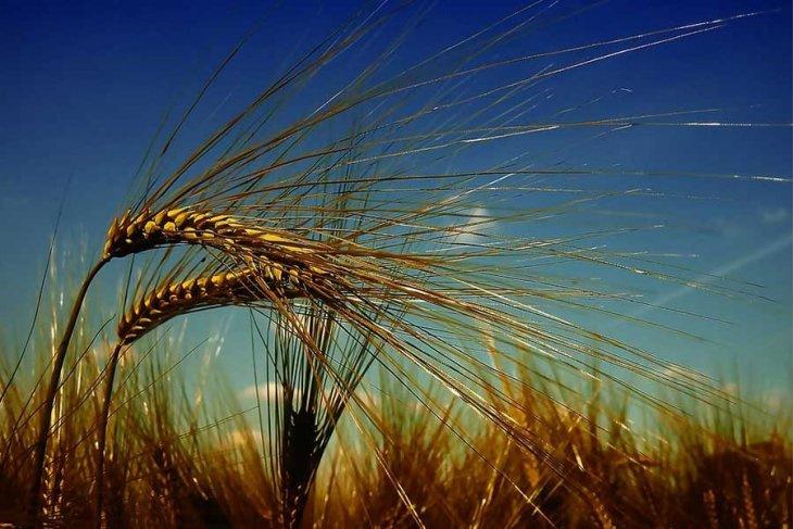 Dolar yerine Ruble geldi! Türkiye Rusya'dan ruble ile buğday alıyor