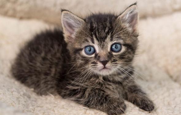 Kedi diye 5 yavru aldı bakın ne çıktı! Veteriner de bilemedi