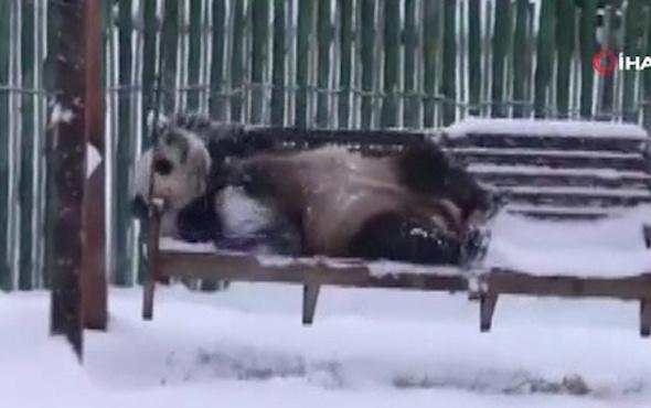 Pandalardan kar keyfi kamerada