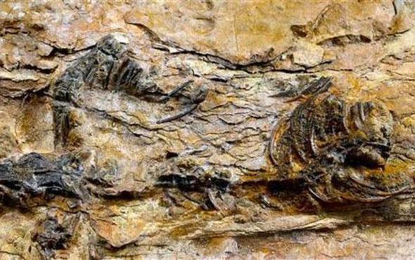 Dünyanın en küçük dinozor ayak izleri keşfedildi