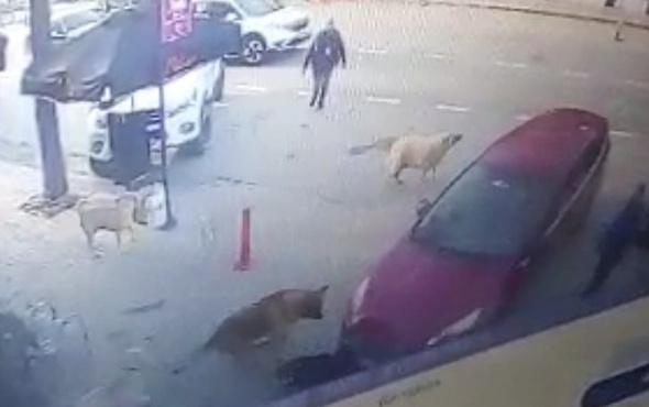 Sokak köpeklerinden 'insanlık' dersi! 10'uncu saniyeden sonrası ibretlik