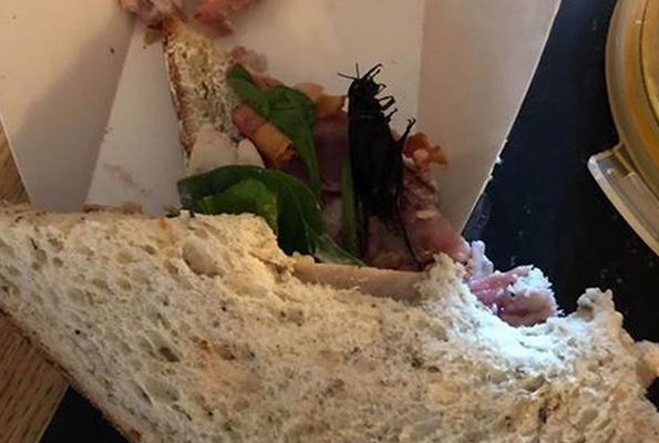 Ünlü mağazanın sandviçinden böcek çıktı