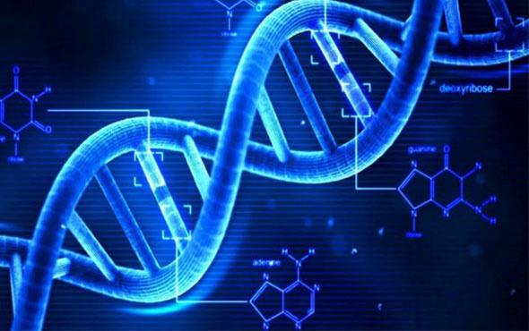 DNA testleri de Black Friday indirimine girdi!