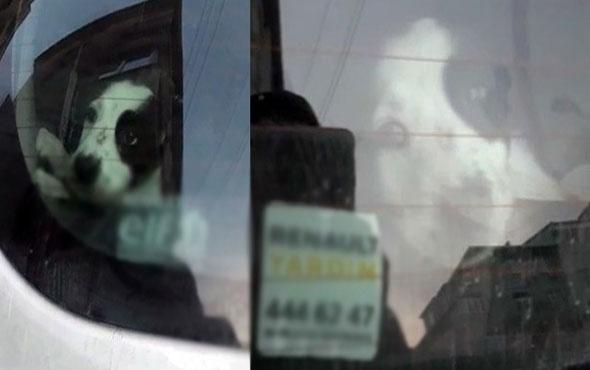Araç bagajında saatlerce havasız bırakılan köpeğin inlemesi yürekleri sızlattı