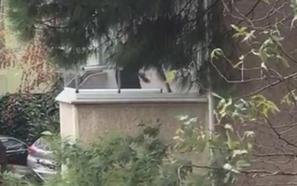 Balkonda köpeğini öldüresiye dövdü! İsyan ettiren görüntüler