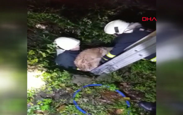 Su dolu çukura düşen köpek kurtarıldı