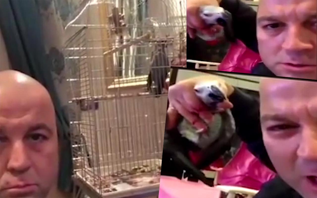 Murat'ın işkence ettiği papağanı bakın kim aldı bacağını da kırmış