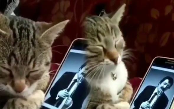 Müslüm Gürses dinleyen efkarlı kedi viral oldu