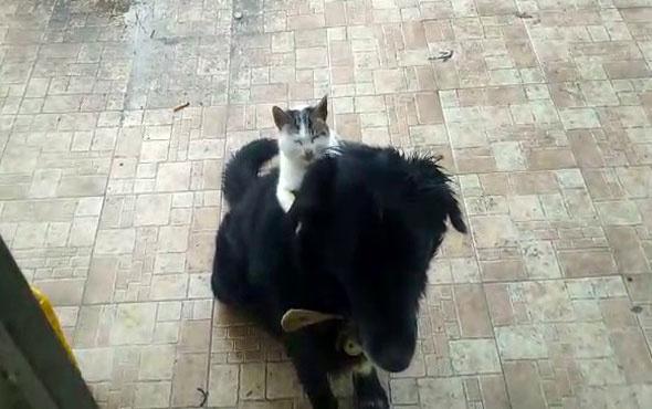 Kedi ile köpeğin ilginç dostluğu