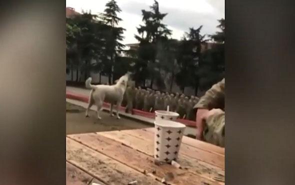 Mehmetçiğe eşlik eden köpek büyük ilgi gördü