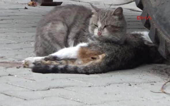 Ölen kedinin başında yas tuttu