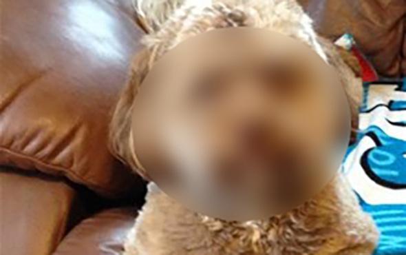 İnsan suratlı köpek dünyayı şaşırtıyor