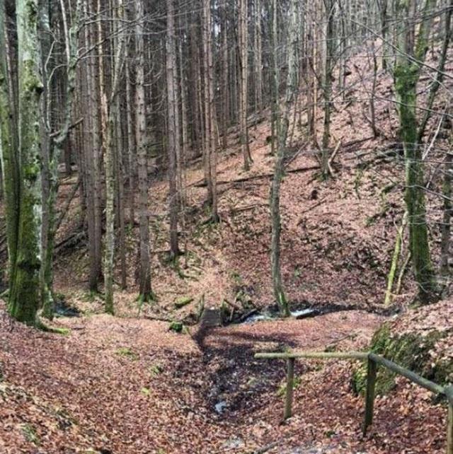 Şoke eden olay! Berna Laçin ormanda kayboldu - Sayfa 2