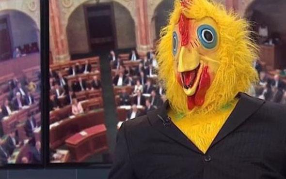 Parti sözcüsü televizyonuna tavuk kostümüyle çıktı!5 dakika gıdakladı