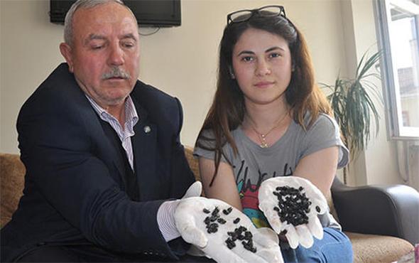 Bursa'yı alarma geçiren o böcek bakın ne çıktı?