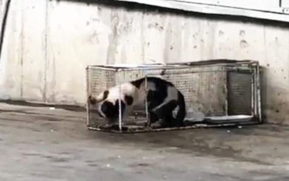 Markette sucuk 'çalan' kediye kafes cezası verdiler!