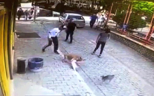 Pitbull dehşeti kamerada! Bir anda kediye saldırdı