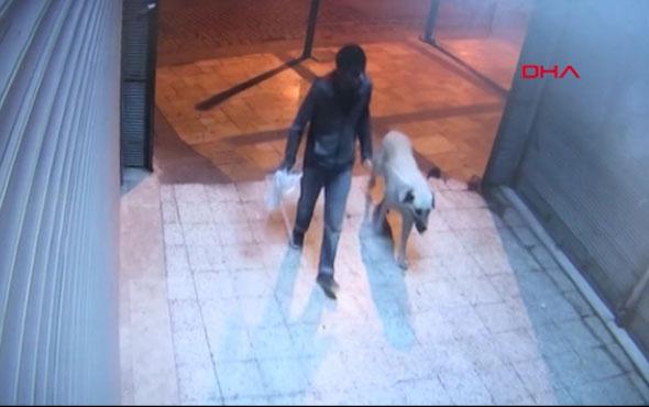 Sokak köpeğini boğarak öldürdükten sonra tecavüz etti