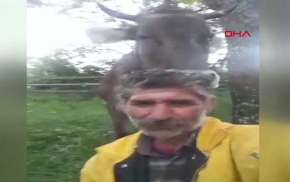 Artvin'in kuaför ineği sosyal medyayı salladı!