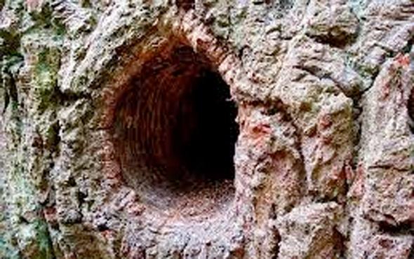 Cinayet zanlısı ağaç kovuğunda yakalandı