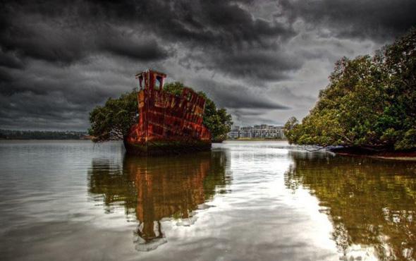 106 yıllık yüzen orman görenleri kendine hayran bırakıyor