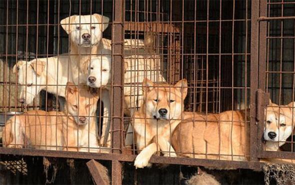 Mahkemeden tarihi karar: Köpek çiftliğine ceza!