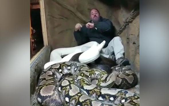 Piton yılanları ile eğlenen adam izleyenleri hayrete düşürüyor