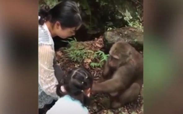Akıl almaz olay! Arsız maymun küçük kızı yumrukladı