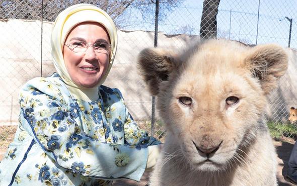 Emine Erdoğan yavru aslanları sevdi
