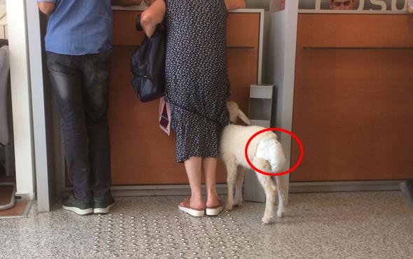 Kuzusunu banka şubesine götürdü!