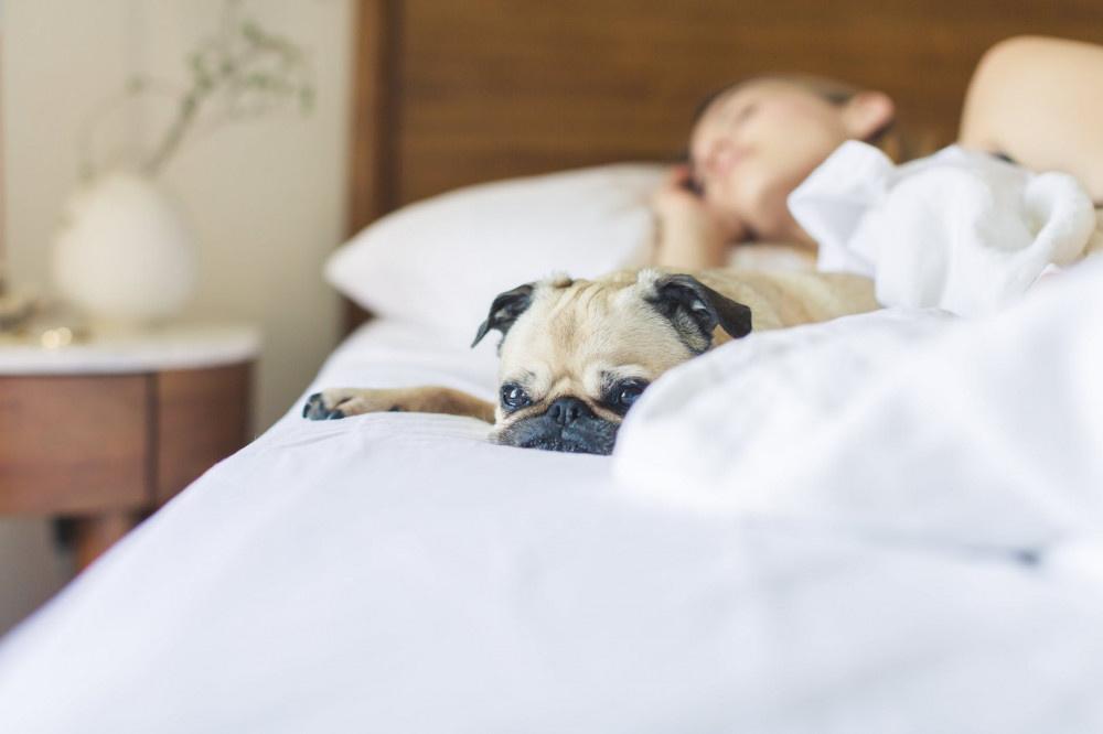 Bel ağrısının sebebi yataktan önce bu! En iyi ve en kötü uyku pozisyonu - Sayfa 2